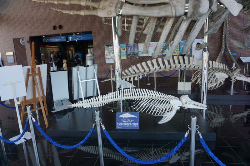 海響館內的鯨魚骨頭標本